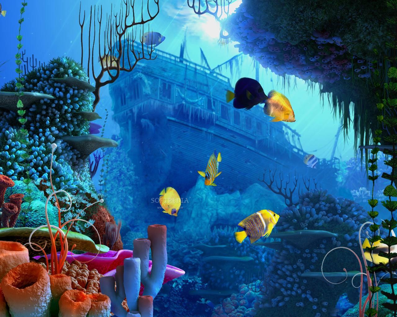 Darcy Cruz coral reef wallpaper 1280x1024