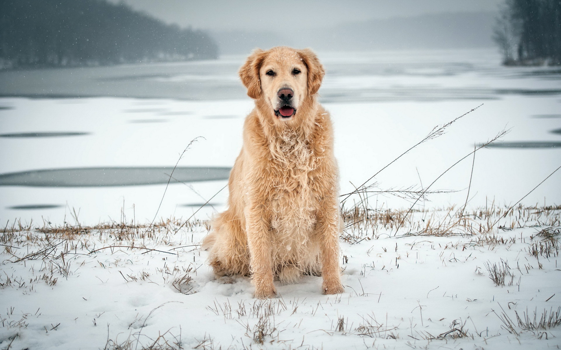 Download Winter Snow Dog Wallpaper | Free Wallpapers