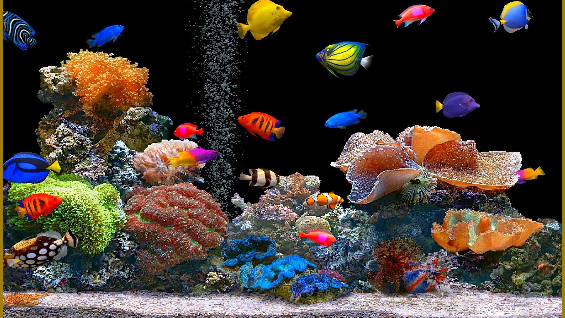 Animated Desktop Wallpaper Fish for Windows 81 1920x1080