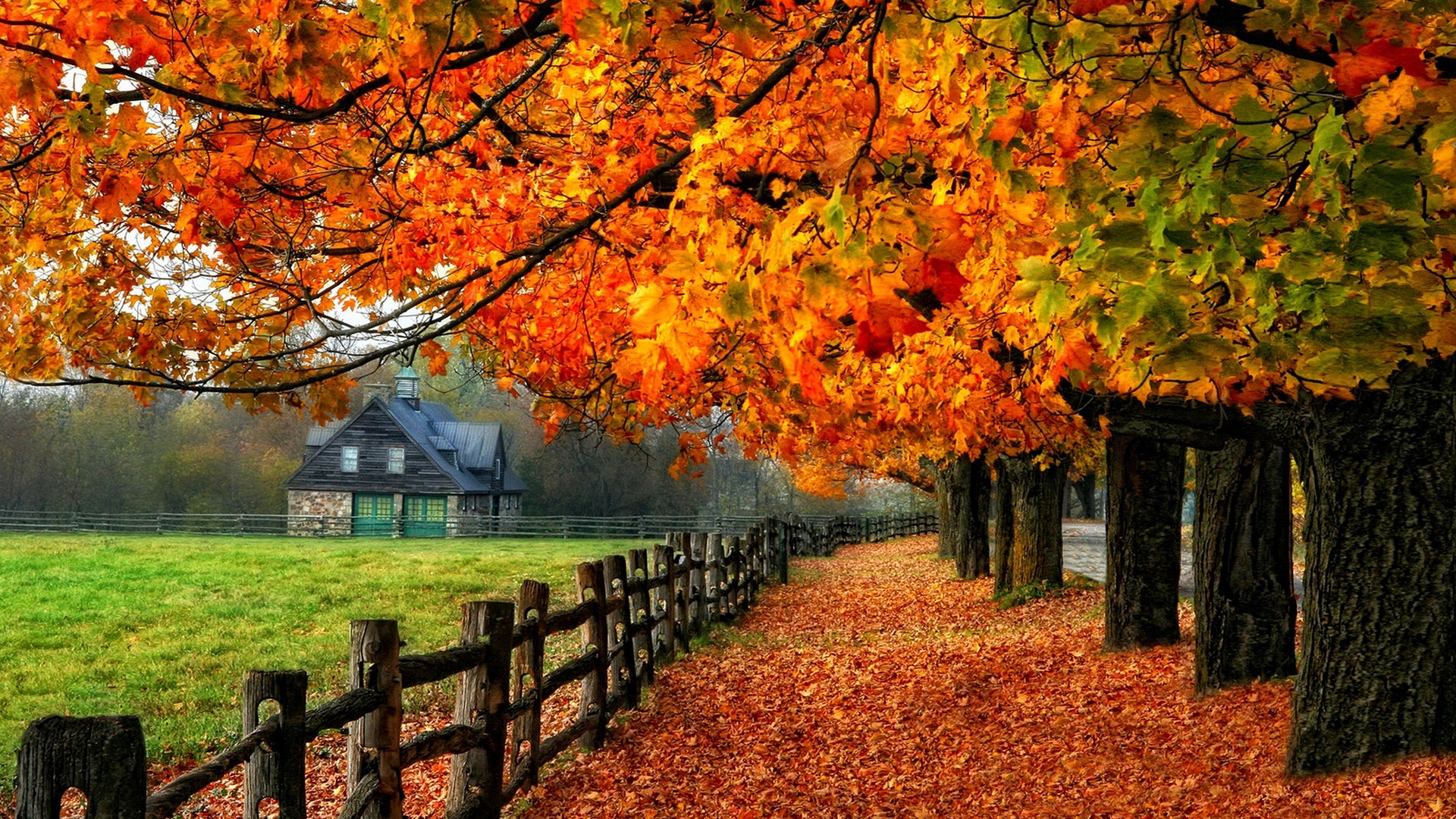 Colorful autumn red leaves path grass house Wallpaper 1920x1080 1920x1080