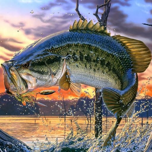 largemouth bass fishing wallpaper screensaverjpg 512x512
