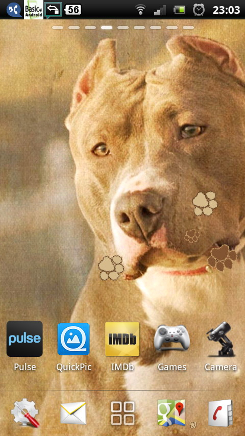 Download Download Pitbull Dogs Live Wallpaper Apps For Android Phone