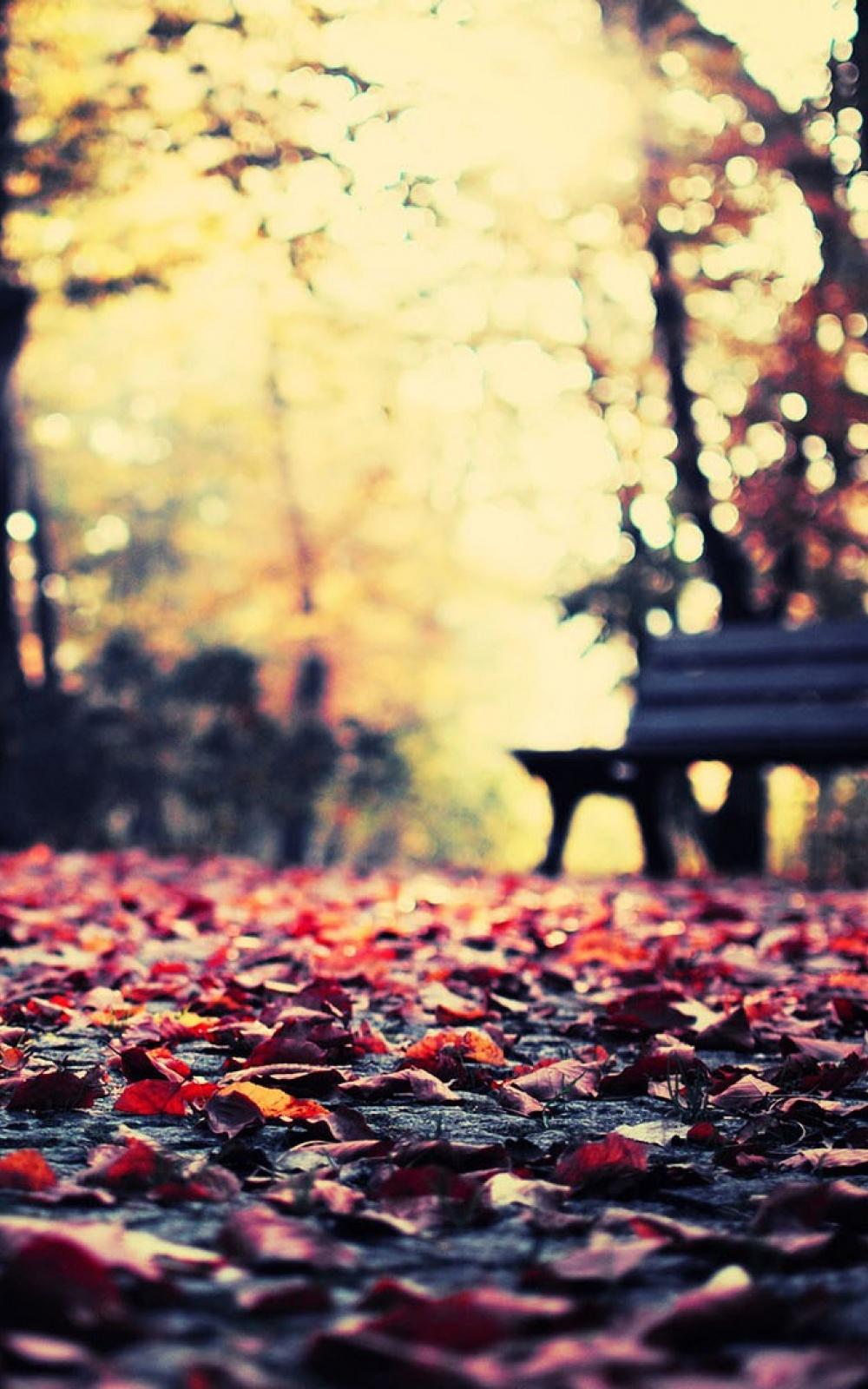 Autumn Leaves Park Bench iPhone 6 Plus HD Wallpaper iPod Wallpaper 1000x1600