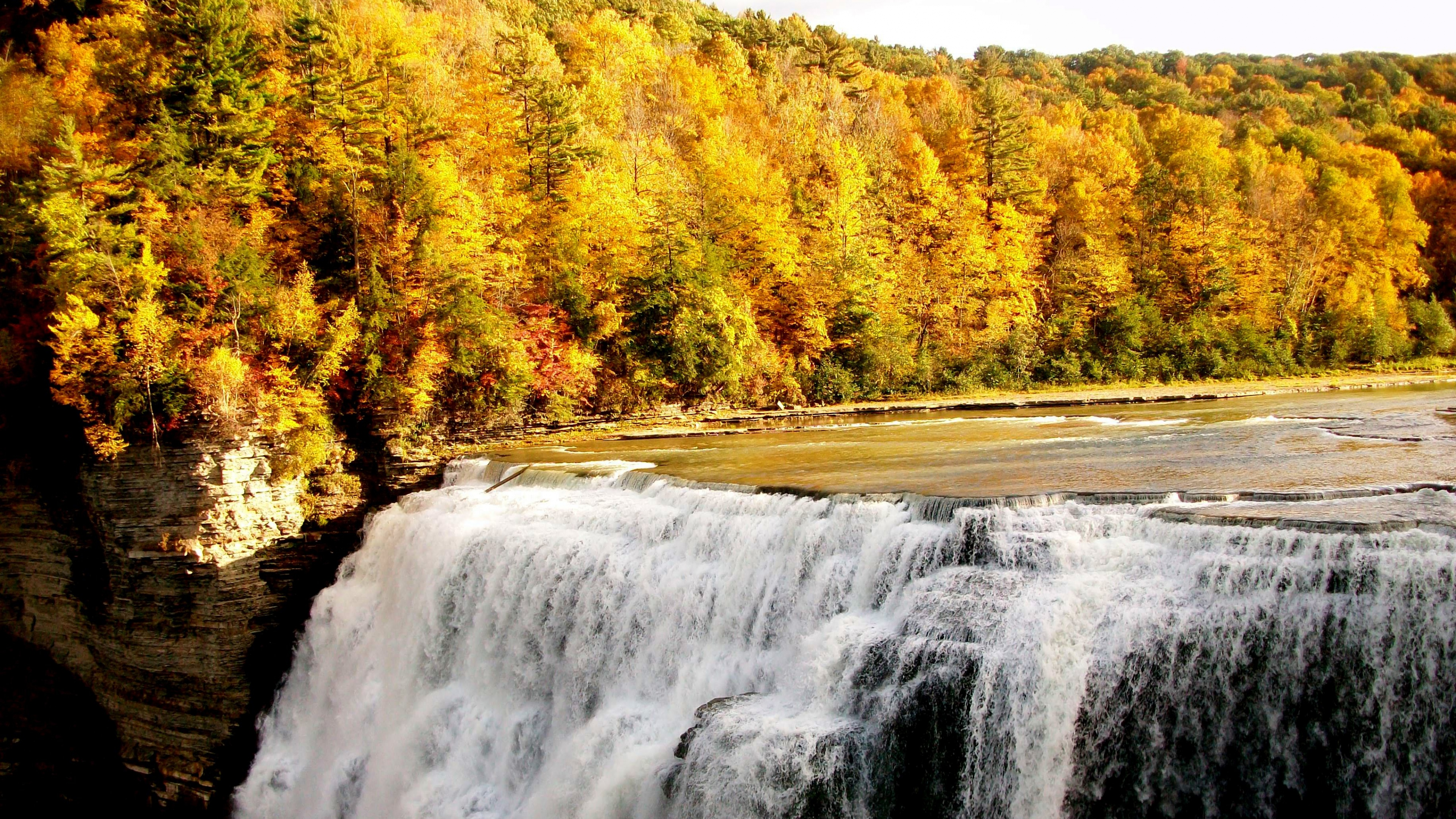 Осень в лесу картинки красивые