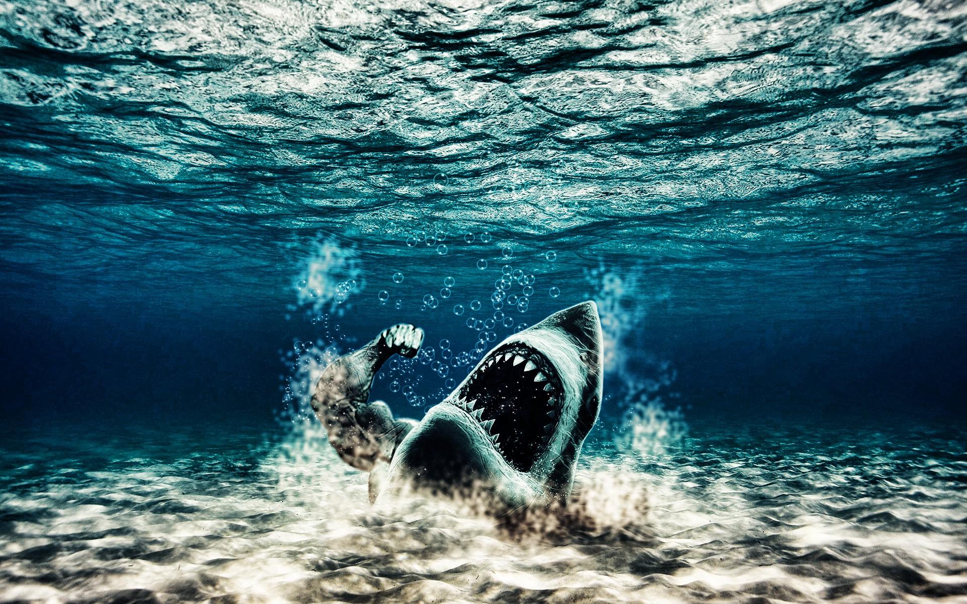 Free Download Underwater Wallpaper Iphone Mobiles Shark
