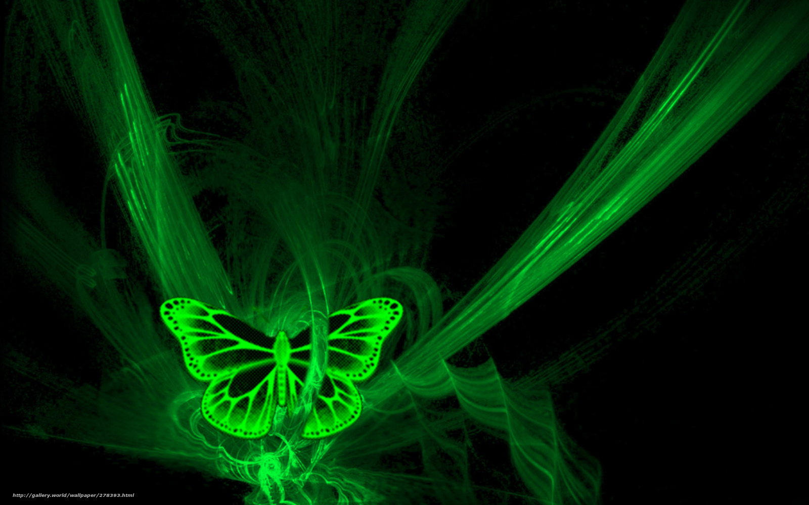 wallpaper butterfly neon black green desktop wallpaper 1600x1000