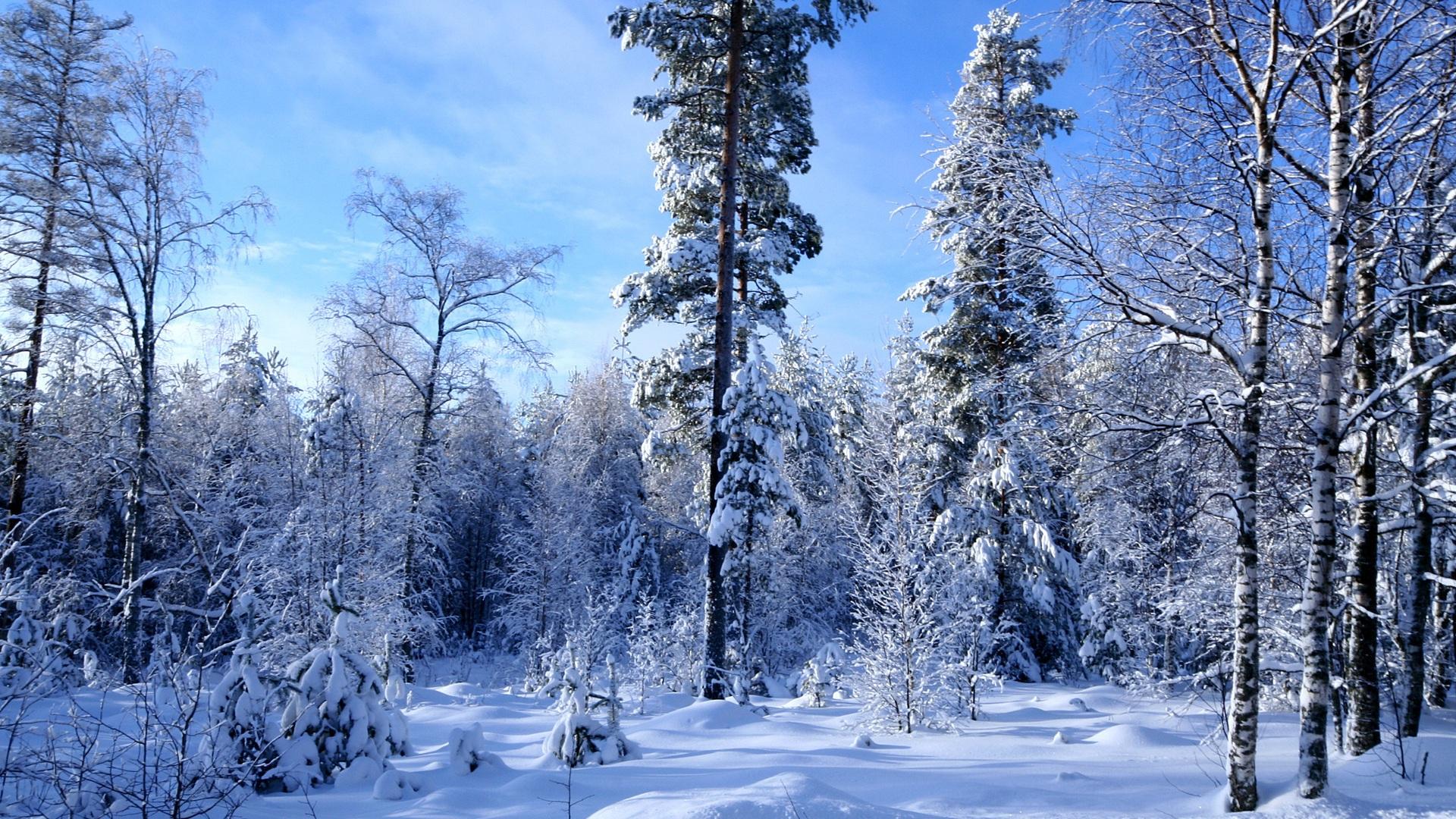 Winter forest snow much Wallpaper Desktop Wallpapers Wallpapers 1920x1080