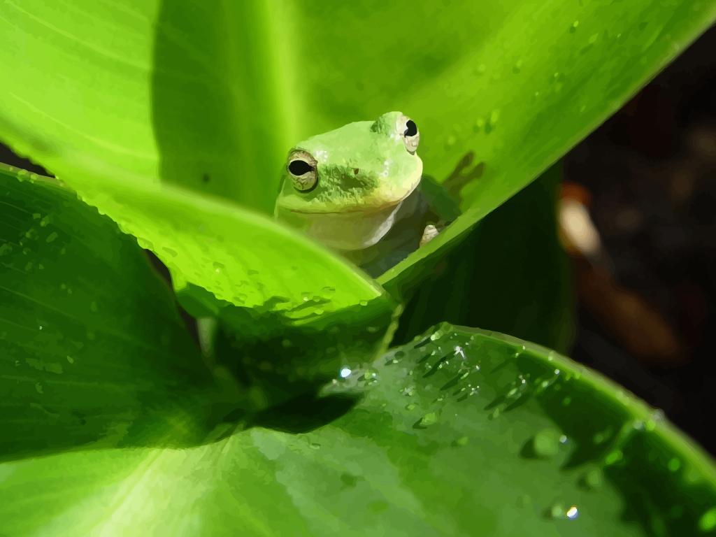 Frog Wallpaper 1024x768