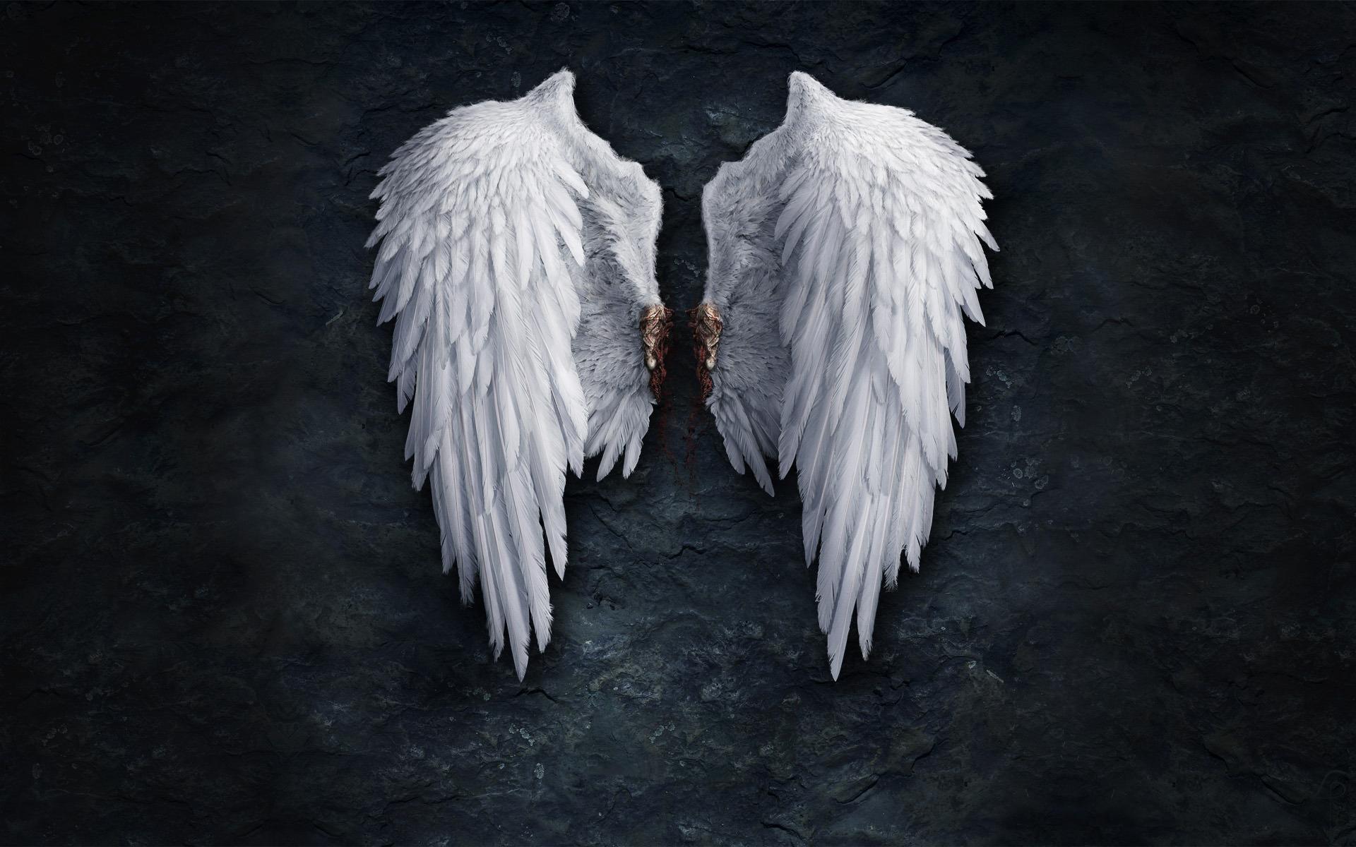 47] Angel Wing Wallpaper on WallpaperSafari 1920x1200