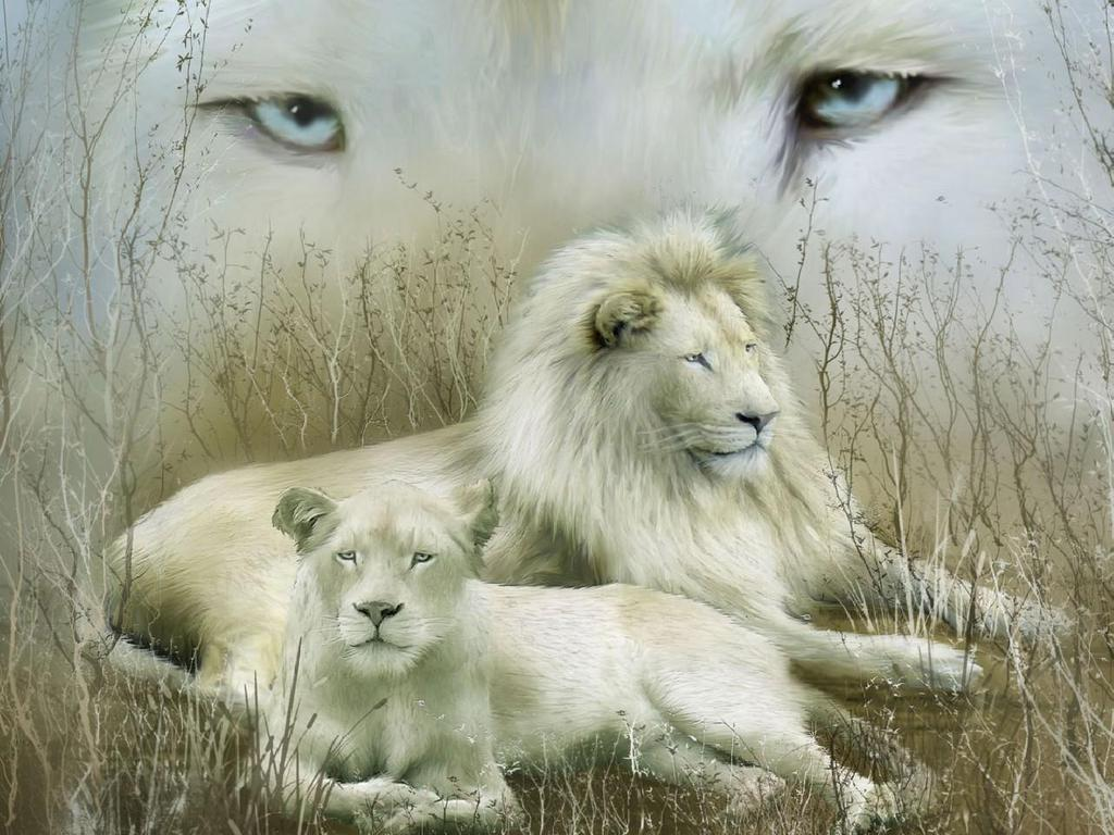 White Lion wallpaper HD HD Wallpapers 1024x768