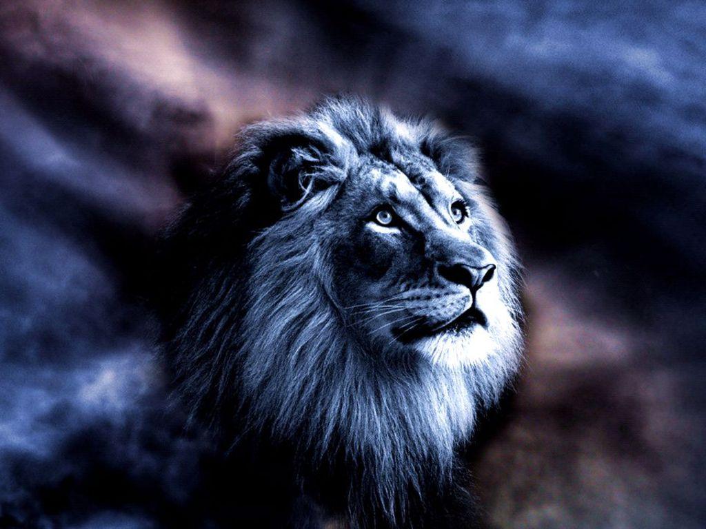 Pin Majestic Lion Wallpaper 1024x768