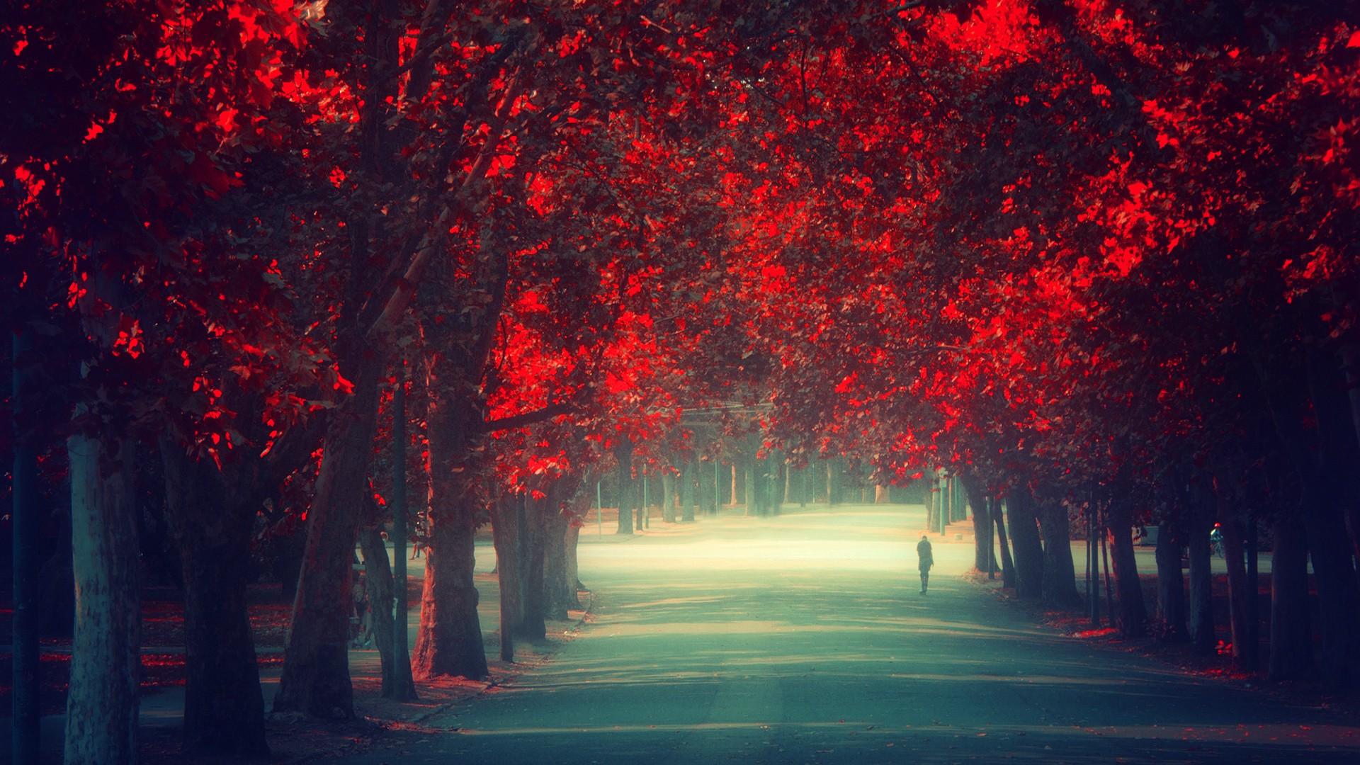 красный осенний лес  № 249381 загрузить