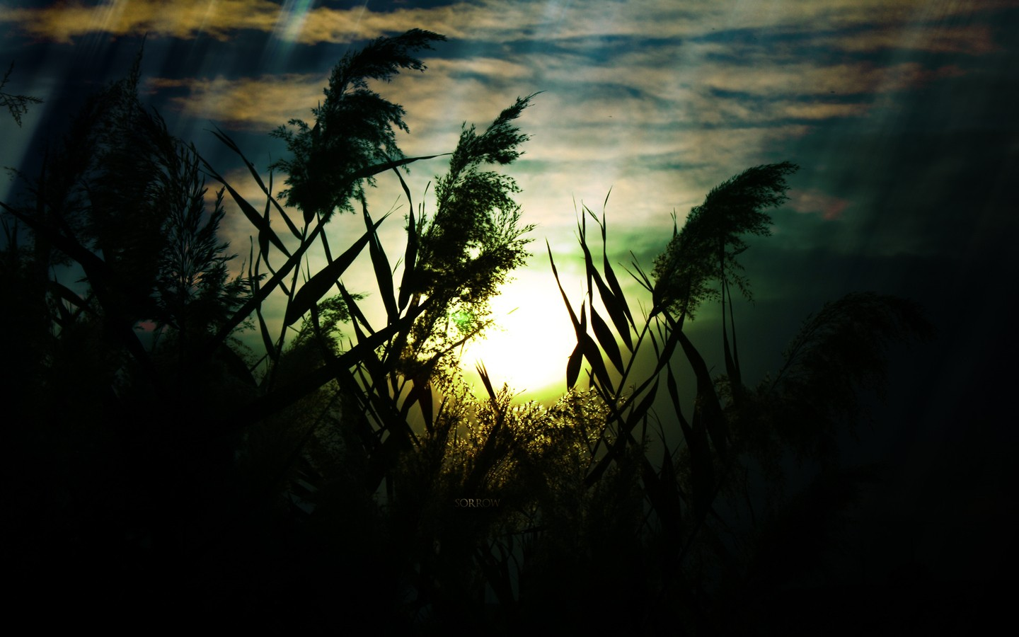 sunrise nature plants sorrow Wallpapers 1440x900
