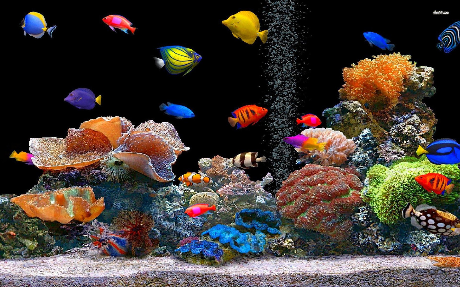 Tropical Fish School Desktop Animal 1920 X 1080 Oscar Fish Desktop 1920x1200