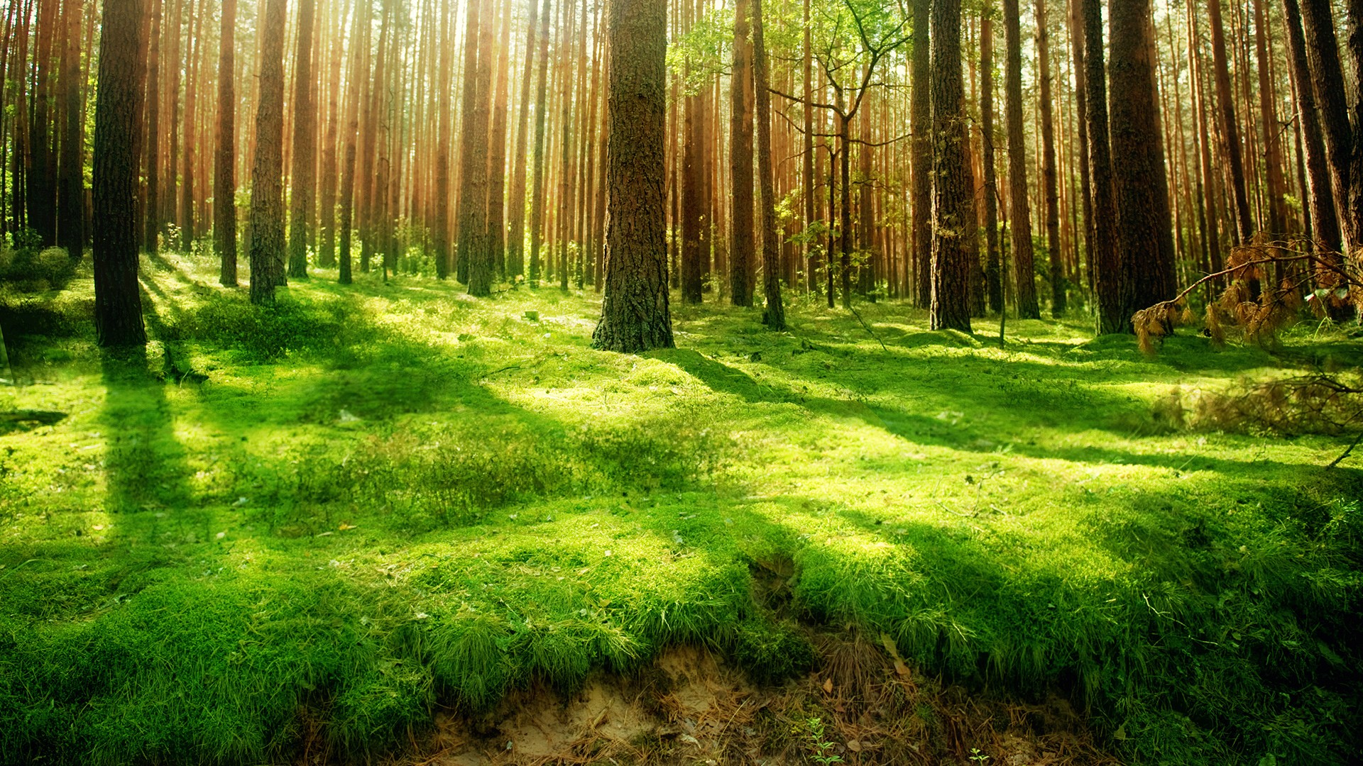 Beautiful Forest Green Wallpaper HD 510 Wallpaper High Resolution 1920x1080