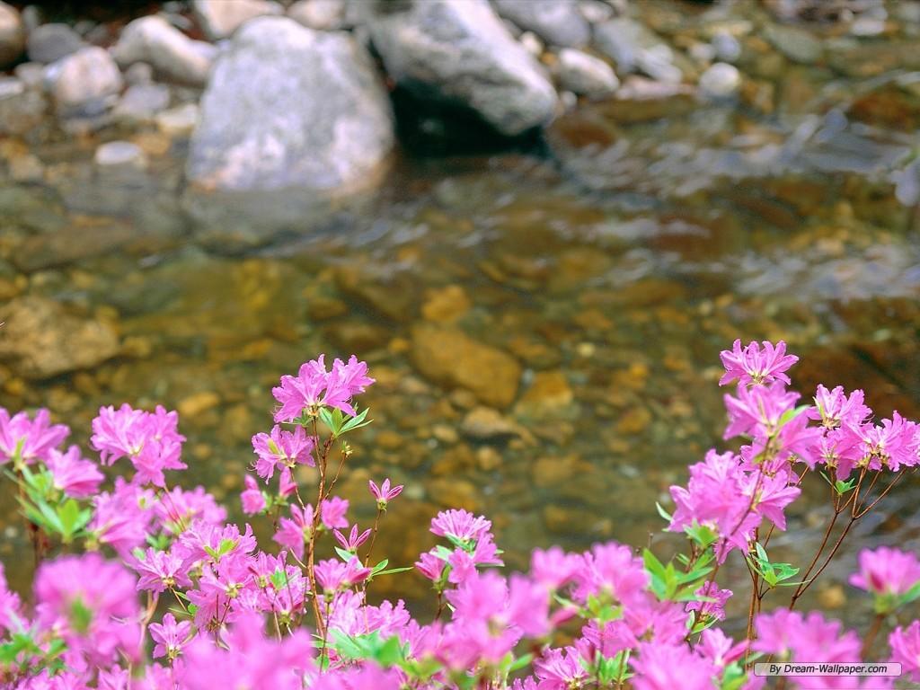 wallpapercomflower wallpaperspring flower wallpaper1024x768free 1024x768