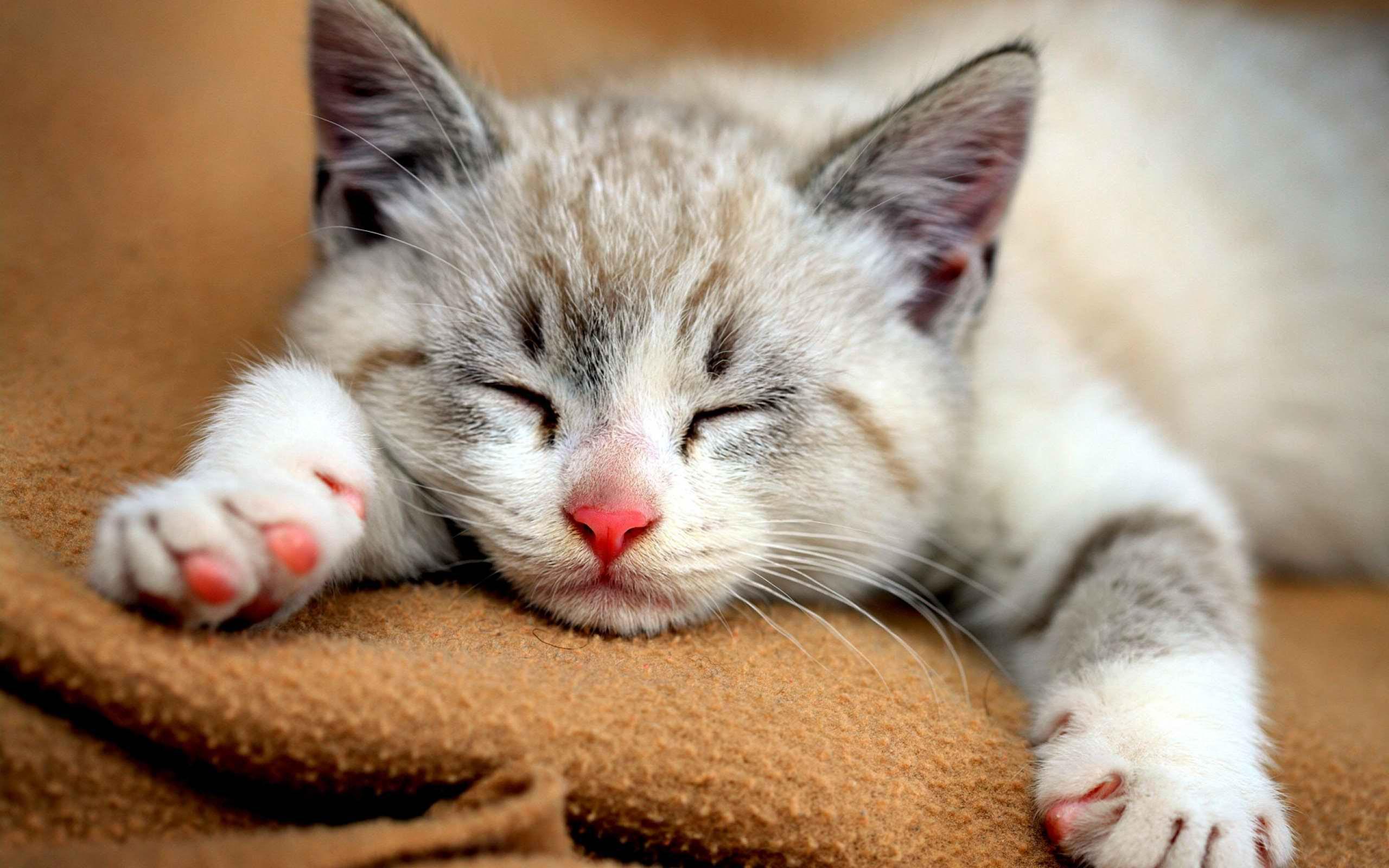 Cute Cat Pictures Tumblr Wallpaper 2606 Best Wallpapers Cute Cat 2560x1600