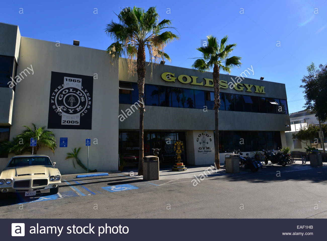 Golds Gym Stock Photos Golds Gym Stock Images   Alamy 1300x957