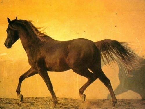 Horse Screensaver Screensavers   Download Beautiful Horse Screensaver 500x375
