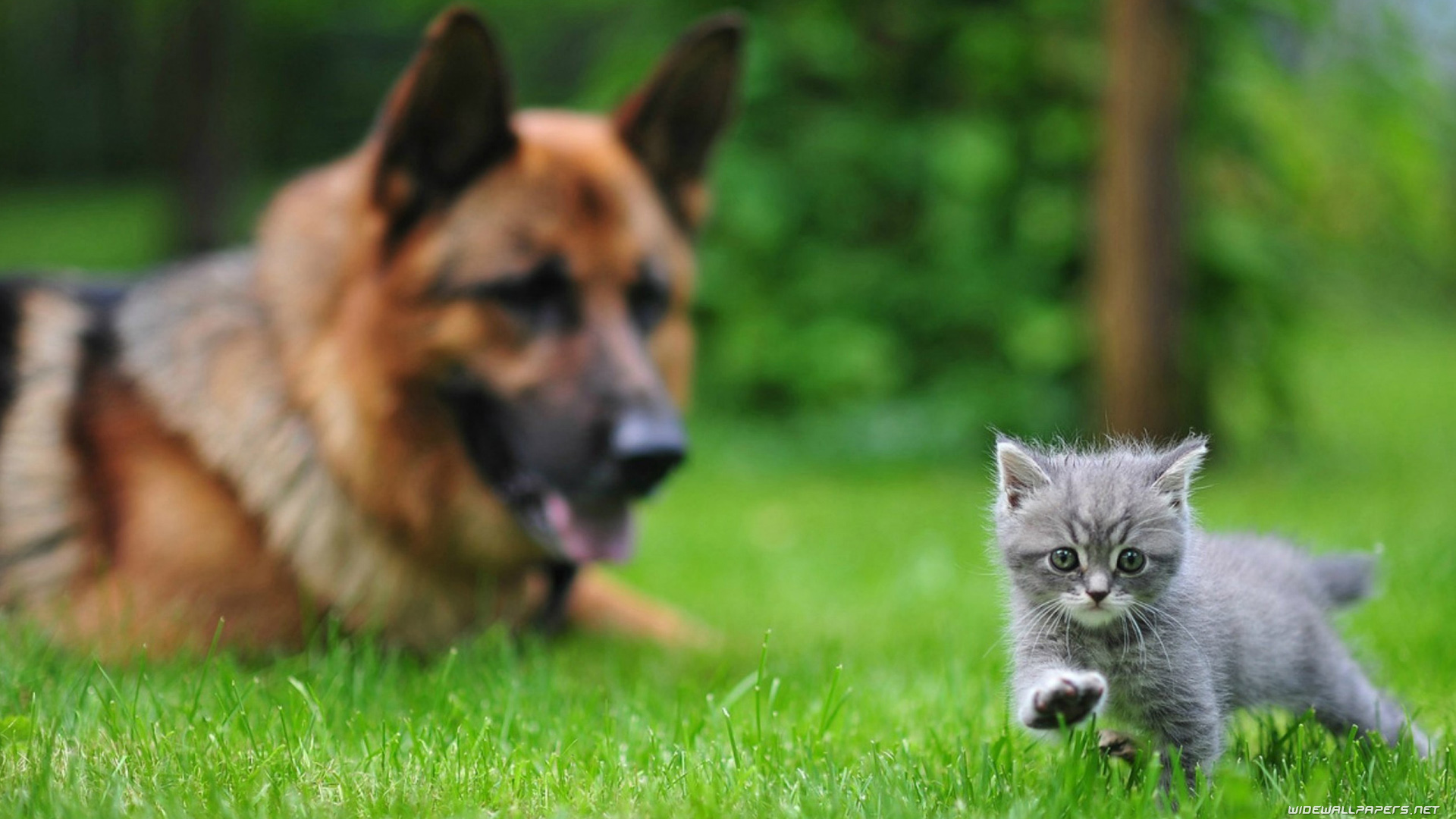 Cats and Dogs desktop wallpapers HD and wide wallpapers 1920x1080