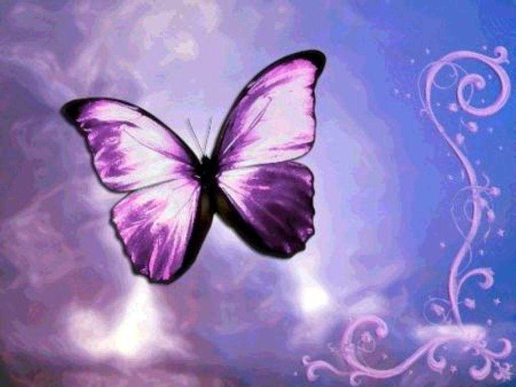 butterfly wallpaper mybarbiegame cute butterfly wallpaper cute purple 1024x769