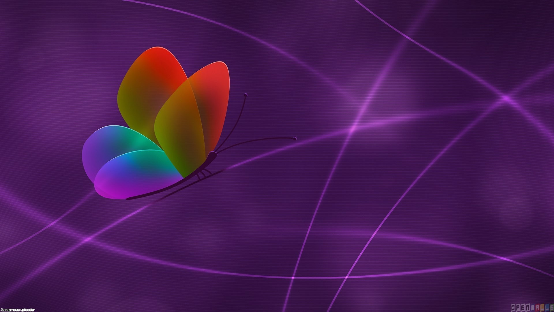 Colorful Butterfly Backgrounds 47 Hd Wallpaper Wallpaper 1920x1080