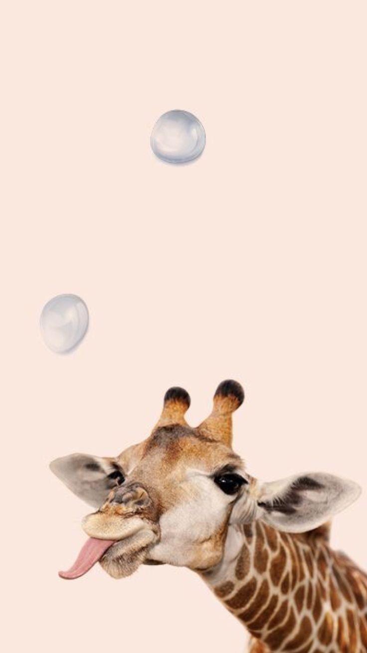 Aesthetic Animals Wallpapers   Top Aesthetic Animals 736x1308
