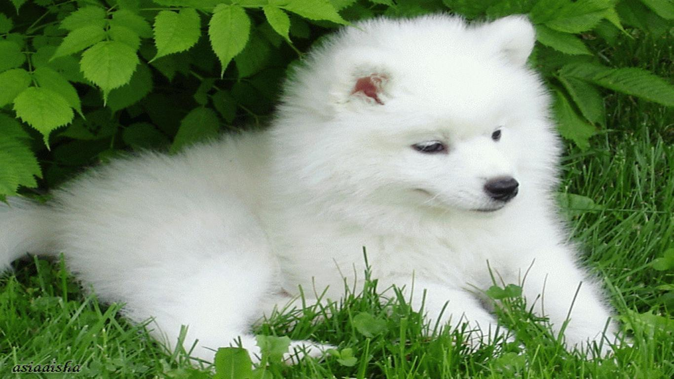 Puppy Wallpapers For Computer 1366x768