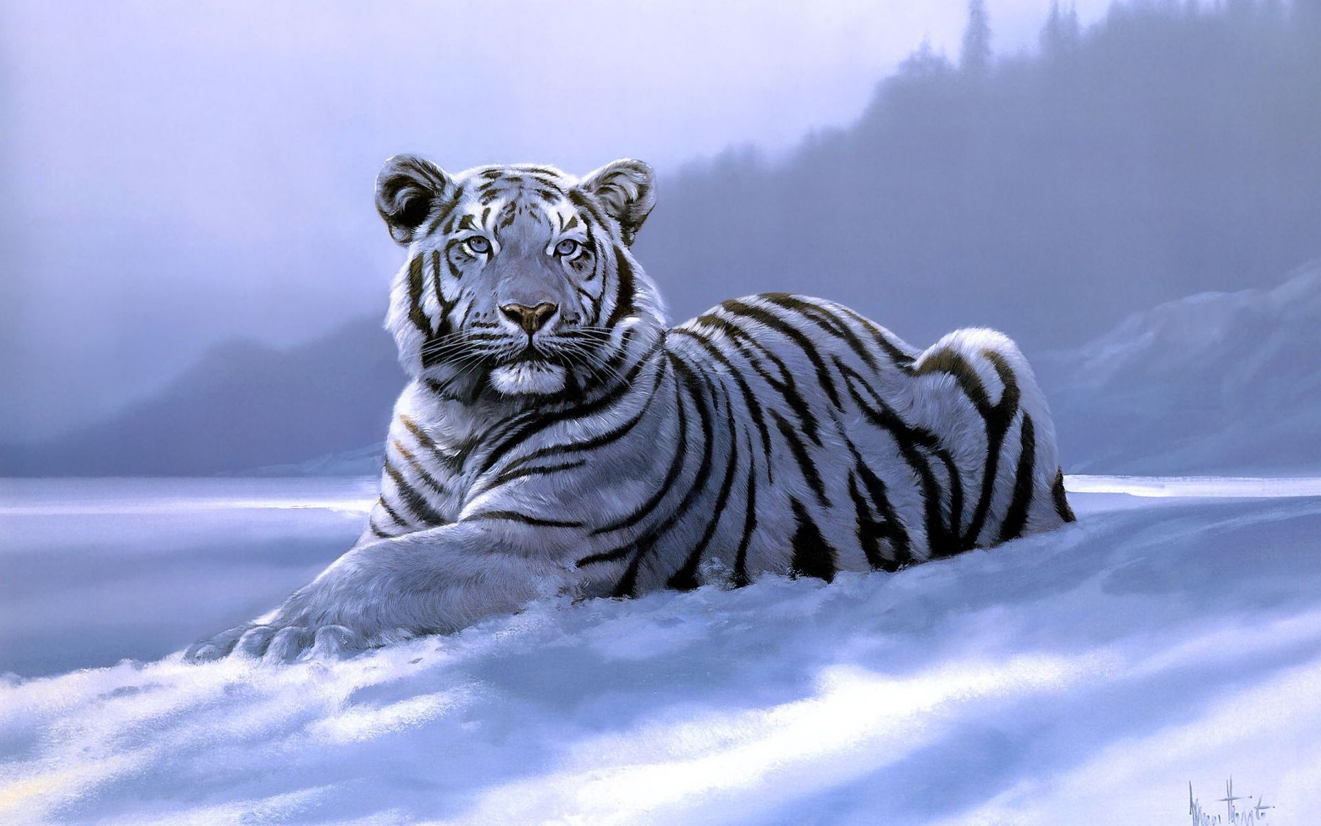 white tiger wallpaper desktop which is under the tiger wallpapers 1920x1200