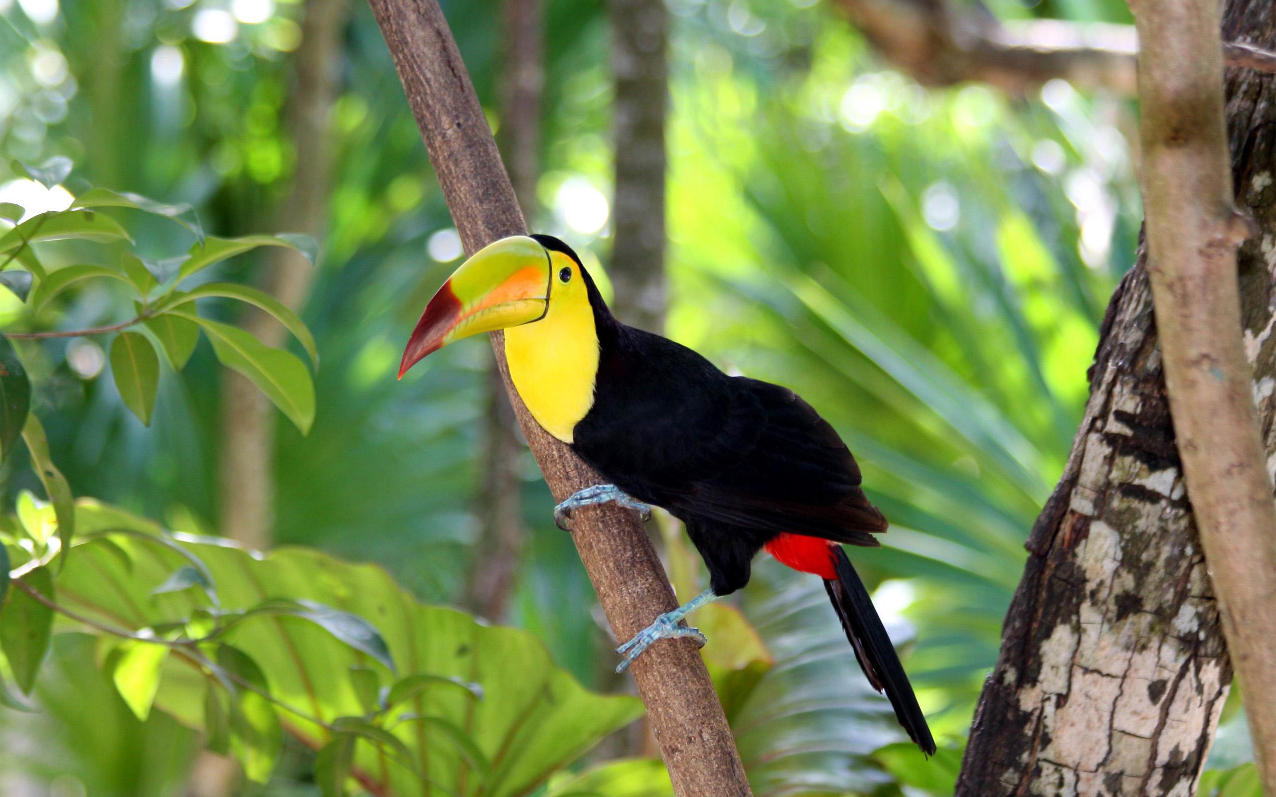bird wallpapers birds tropical images desctopwalls 2560x1600
