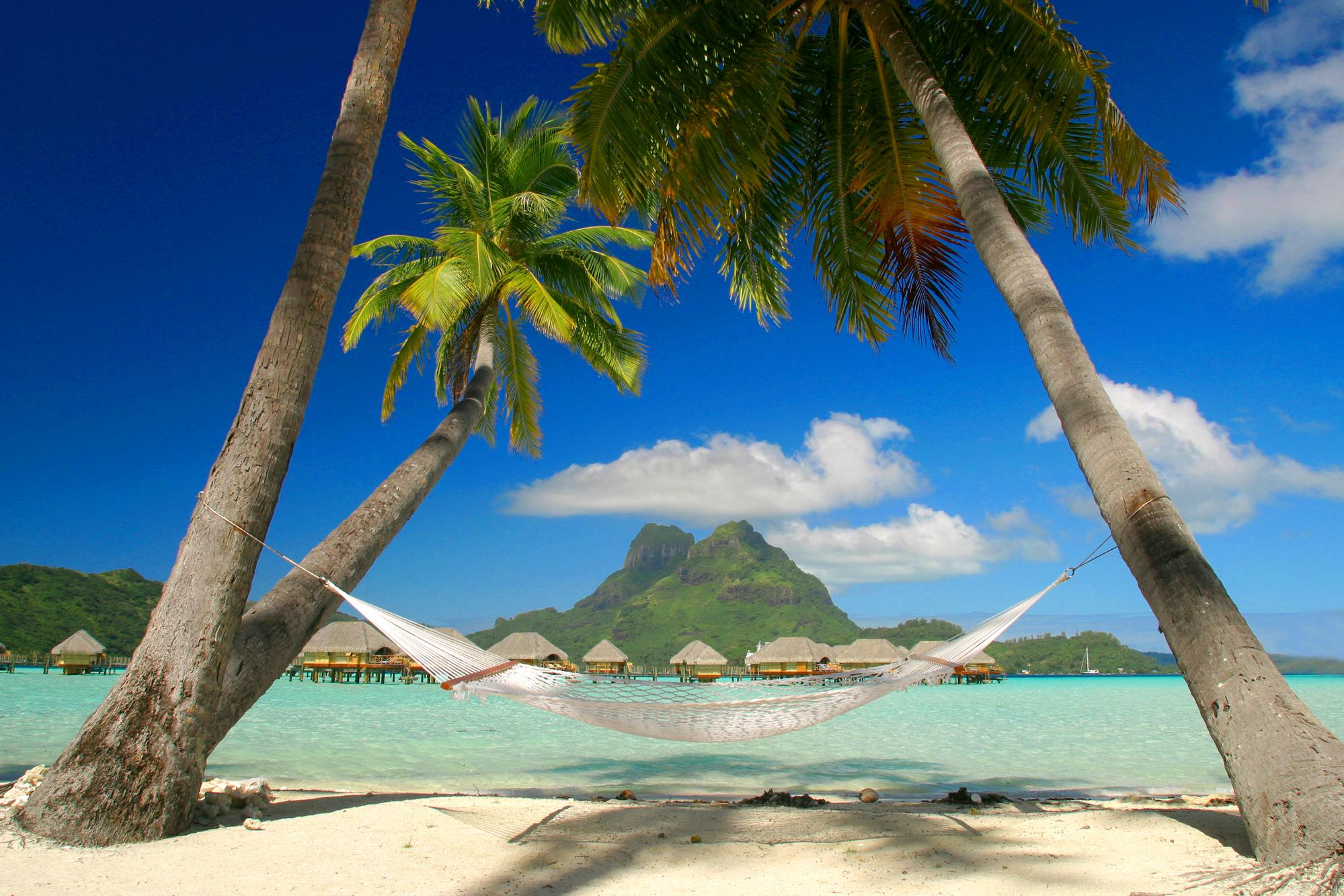 tropical island myspace background