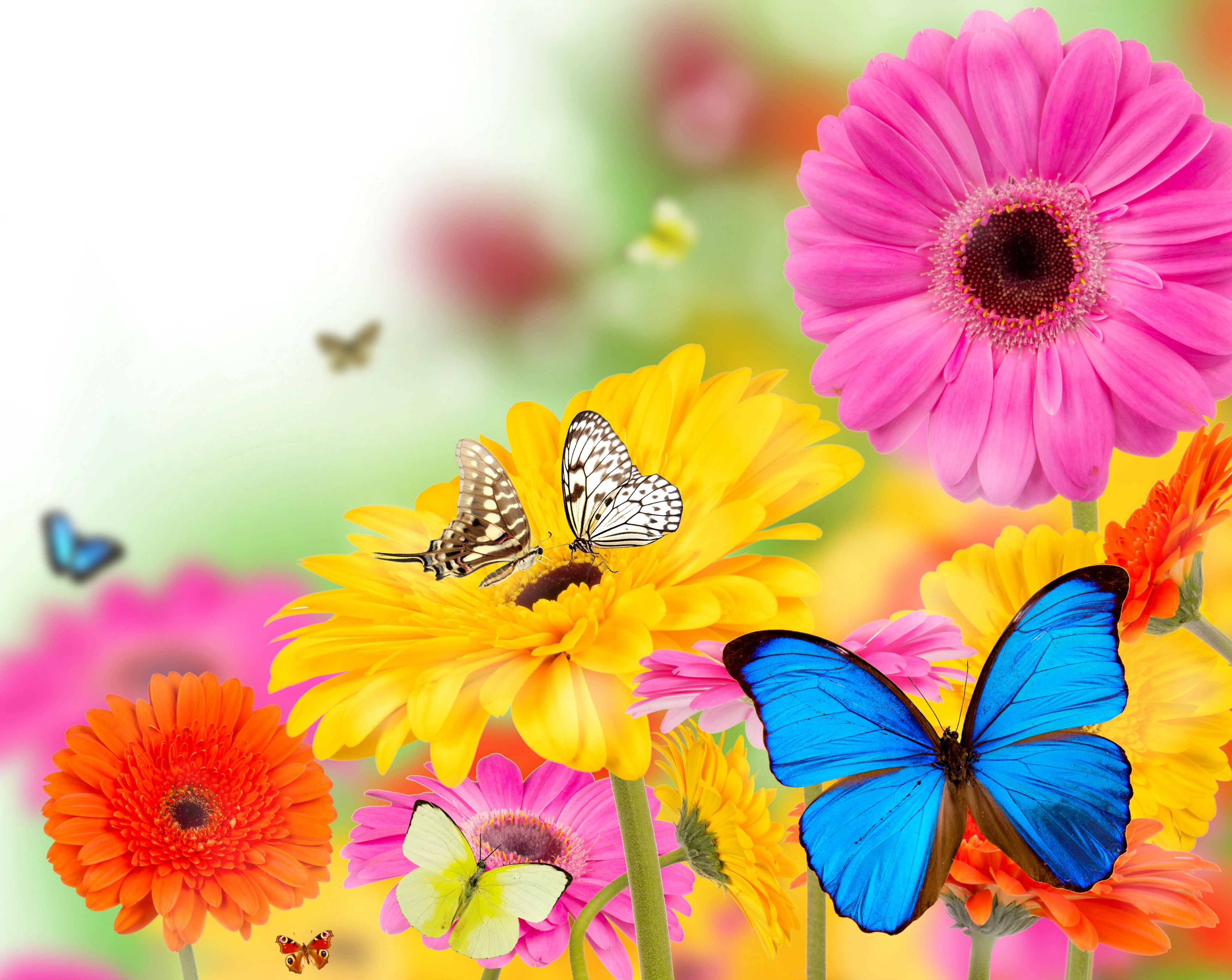 FunMozar Spring Flowers And Butterflies Wallpapers 4000x3183