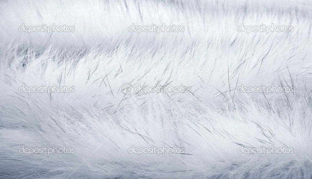 White Fur Background Background of White Arctic Fox 1022x587