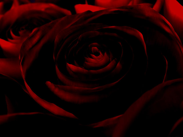 Dark Red Rose Gothic and Terror Wallpapers ShareWallpapers 640x480
