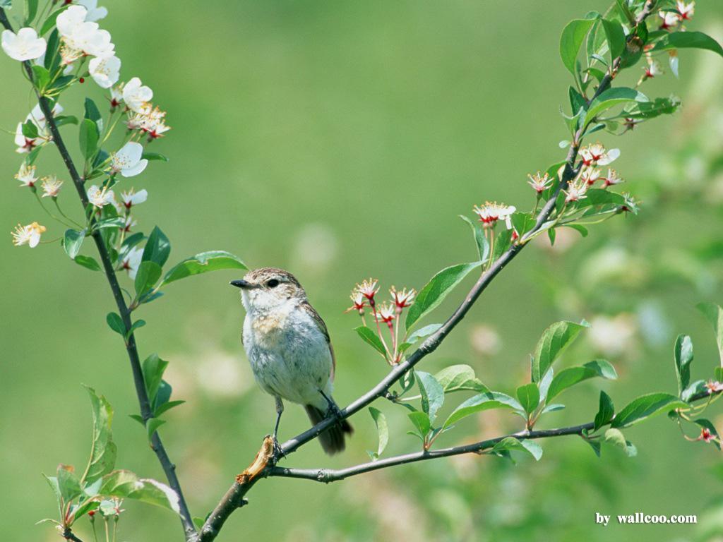 Birds Wallpaper   Lovely Bird in Spring Vol1 1024x768 NO18 Desktop 1024x768