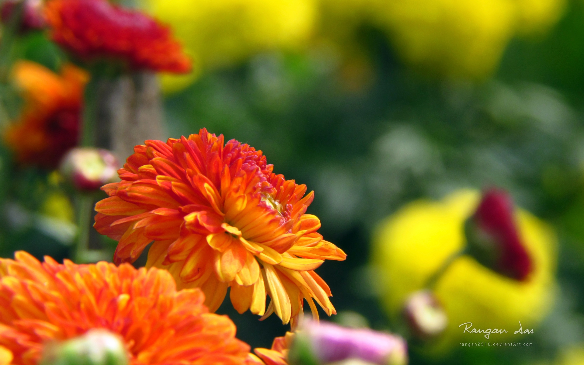 Windows 8 1 hd wallpapers only wallpapersafari for Ideanature