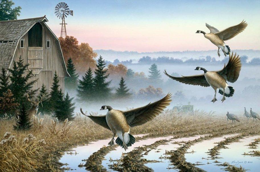 Larry Zach   Canada Geese wallpaper   ForWallpapercom 913x606