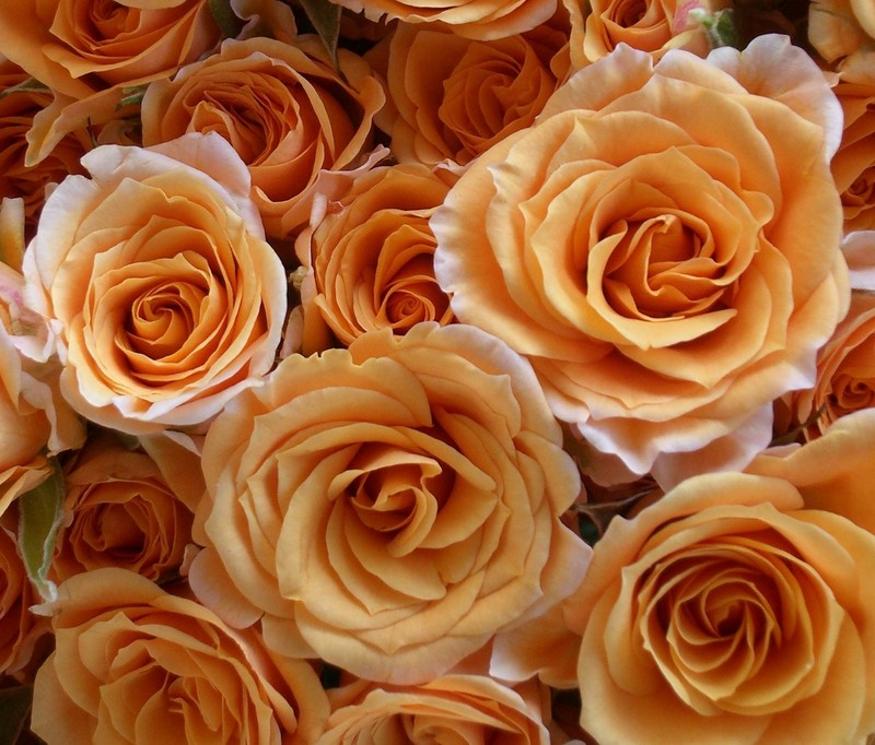 46+ Rose Gold Wallpapers on WallpaperSafari