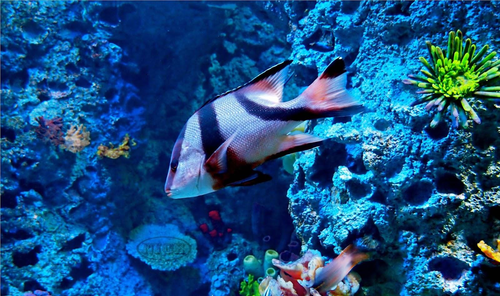 HD Wallpapers Desktop Ocean Life HD DeskTop Wallpapers 1600x947