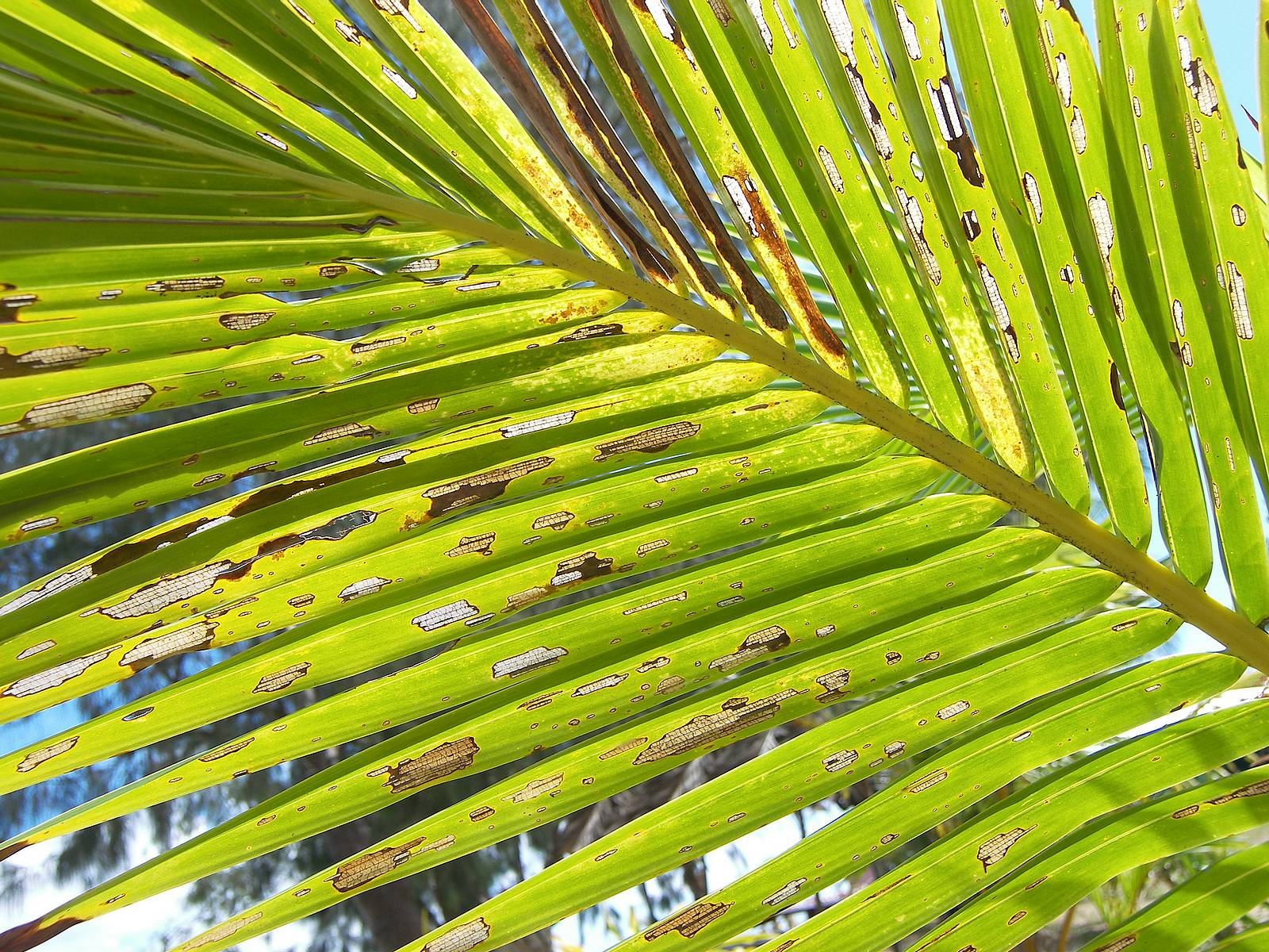 Pin Download Palm Frond Wallpaper 69371 1600x1200