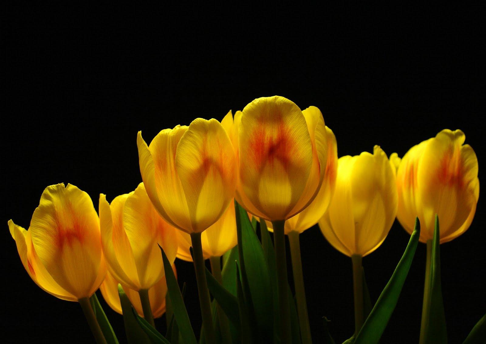 Free Download Description Yellow Flower Wallpaper Yellow Flower