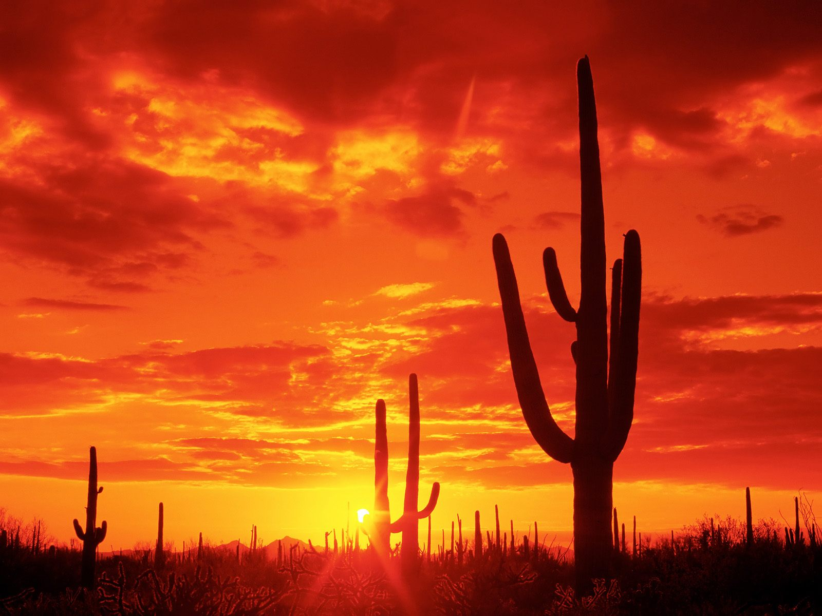 Download HQ Burning Sunset Saguaro National Park Arizona Wallpaper 1600x1200