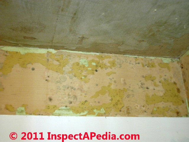 mold on vinyl windows mold in wall cavities mold on wallpaper mold 640x480