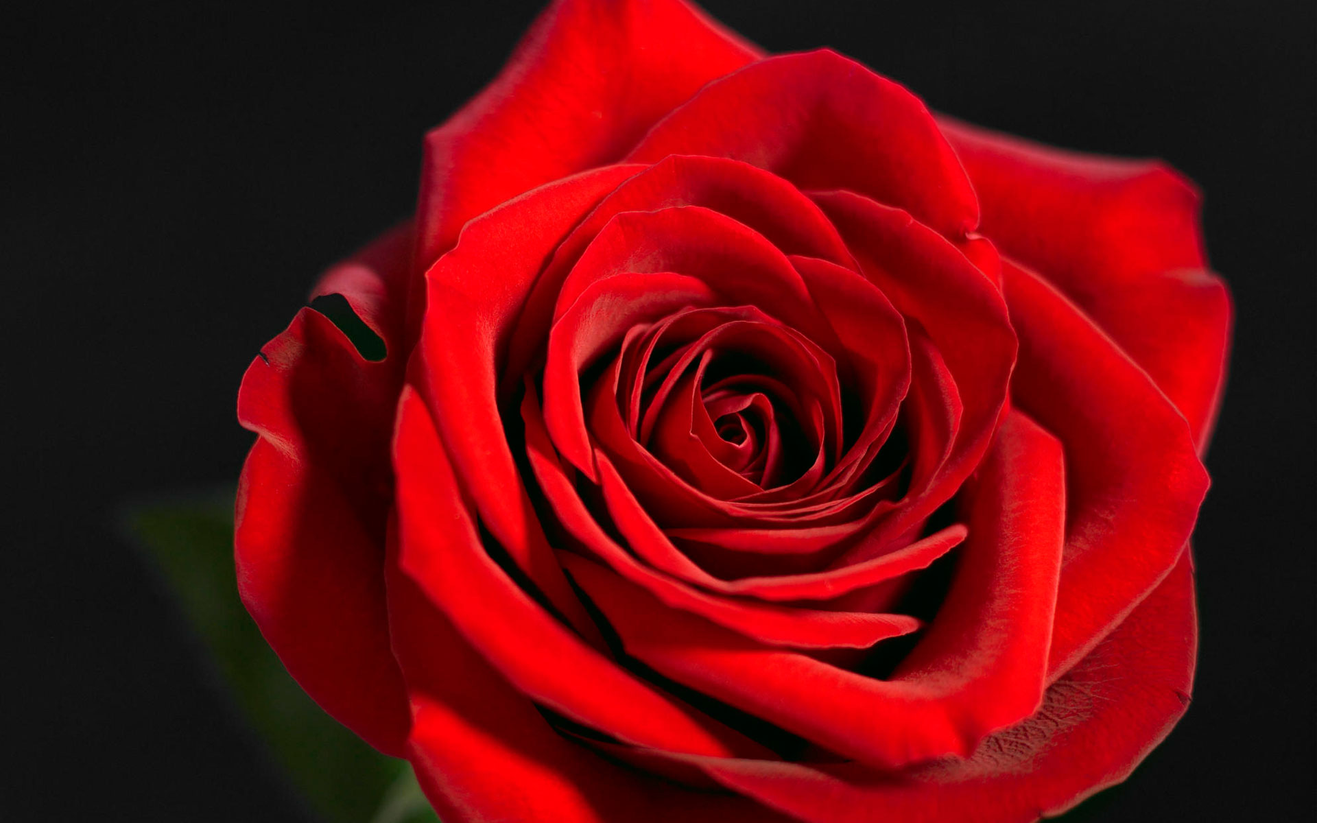 40 Beautiful Red Rose Pictures 1920x1200