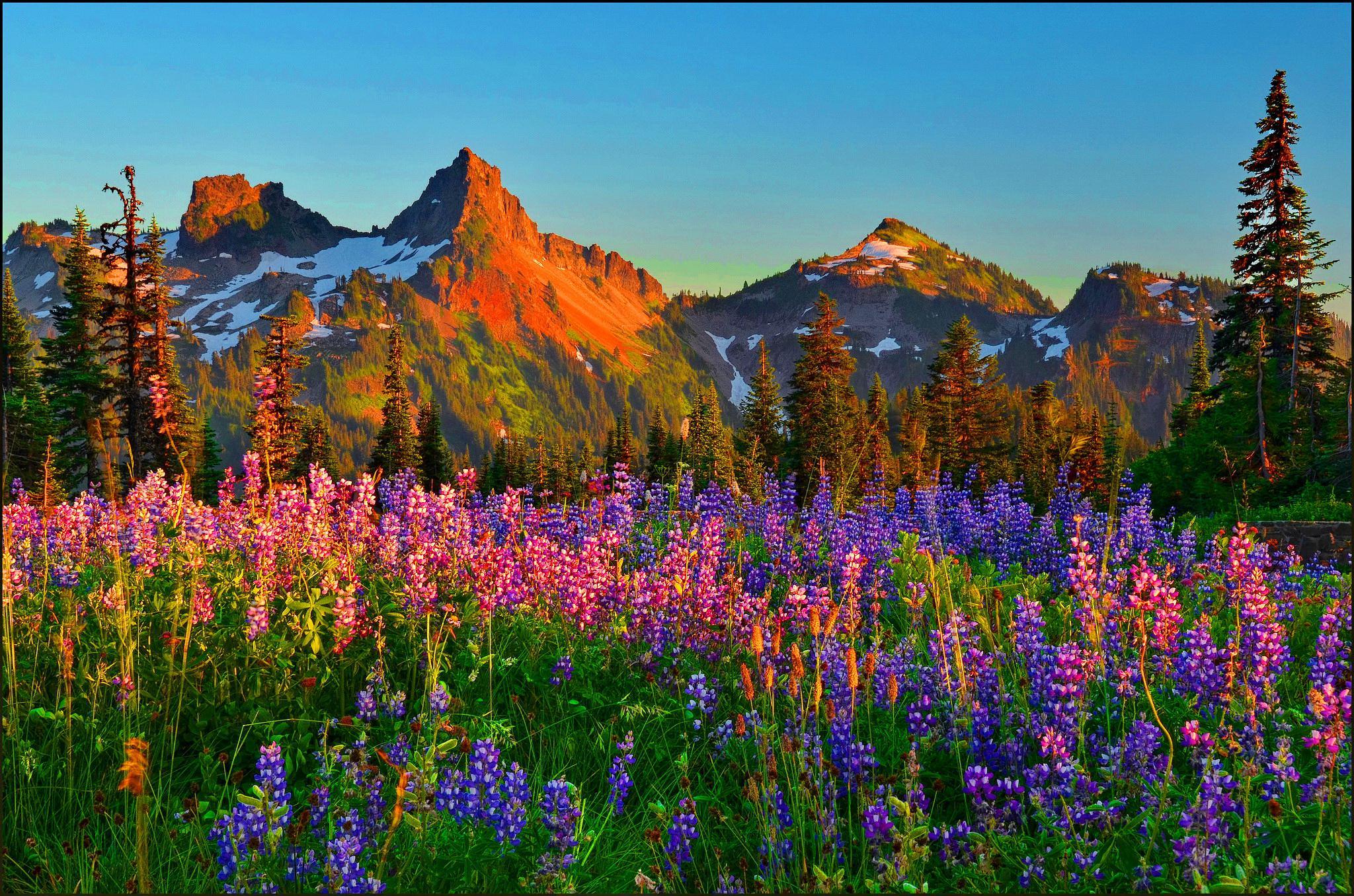37+] Mountain Wildflowers Wallpaper on