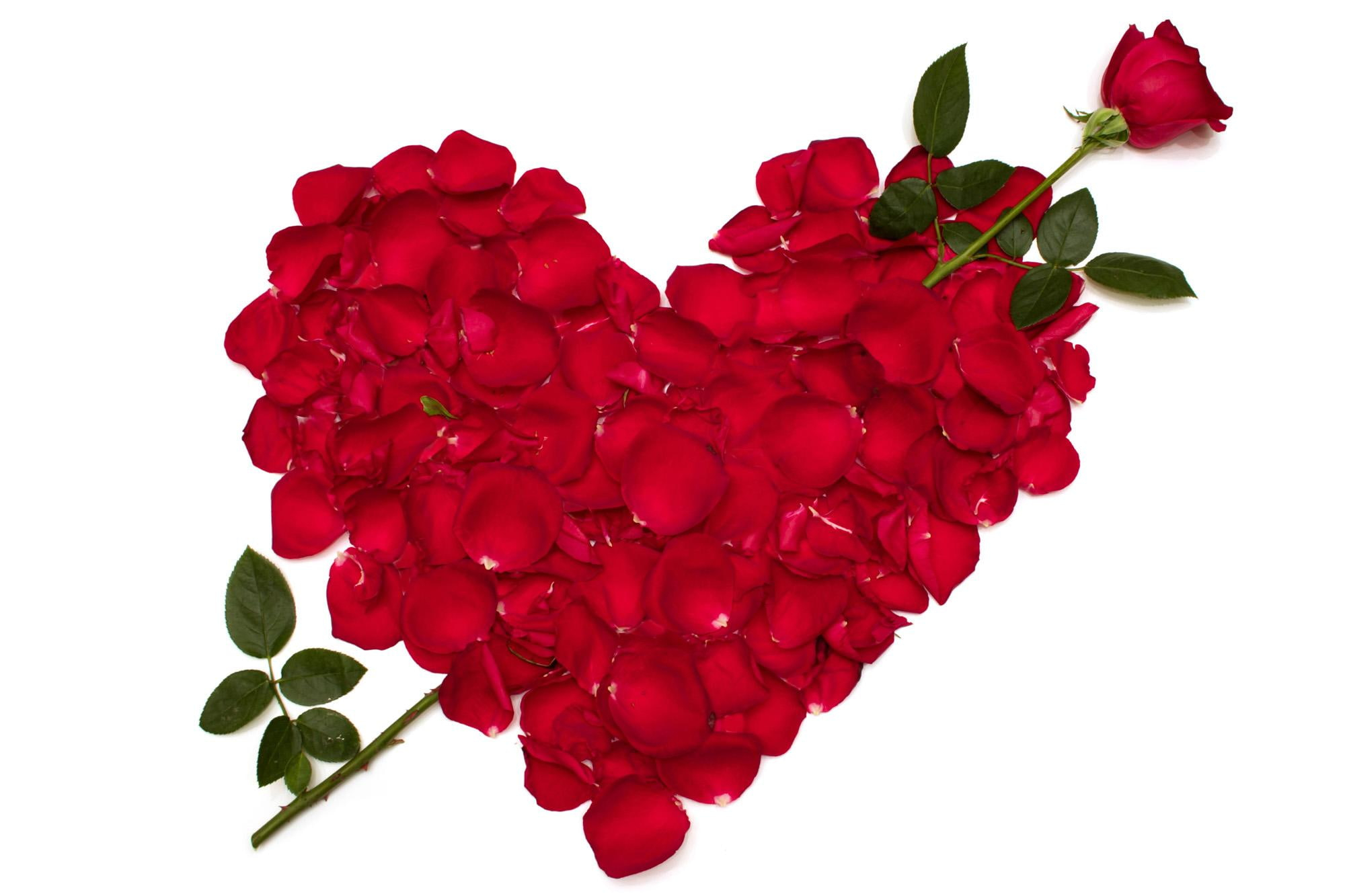 Roses Heart Red Petals Flowers love valentines day valentine 2000x1333