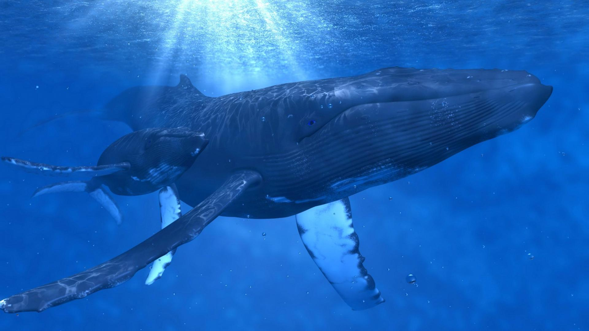 Animals whales underwater baby humpback whale wallpaper 57661 1920x1080