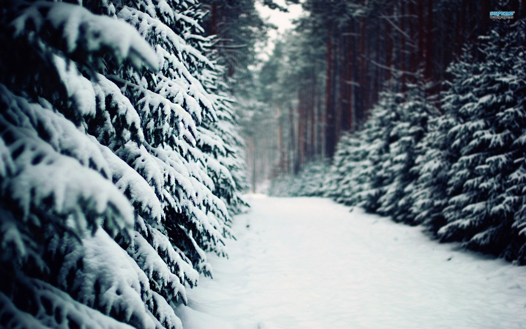 Pin Snowy Forest Road Wallpaper 2560x1600 1728x1080