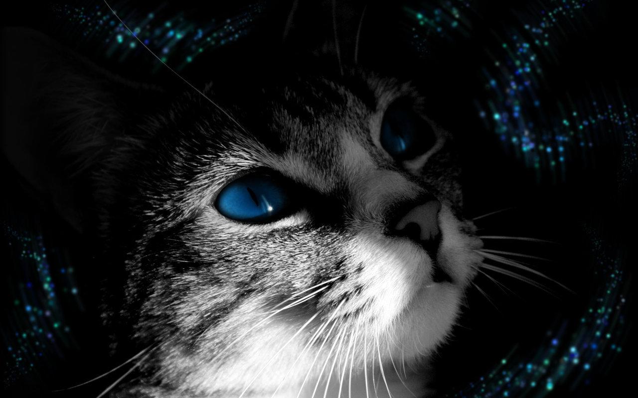 Beautiful Cat   Cats Wallpaper 16122416 1280x800