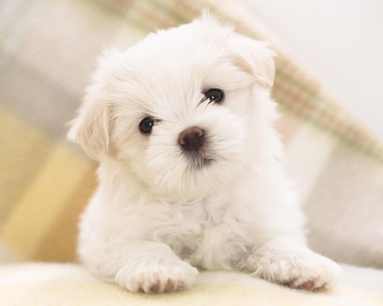 Cute Wallpaper   Teddybear64 Wallpaper 20682571 1280x1024
